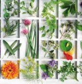 8 βότανα φύλακες υγείας!