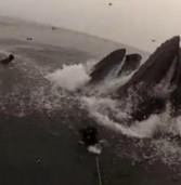 Παραλίγο να τους… καταπιούν οι φάλαινες .(Video)