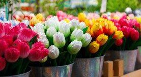 Φτιάξτε μια παραδεισένια βεράντα με λουλούδια που δεν κοστίζουν τίποτε.