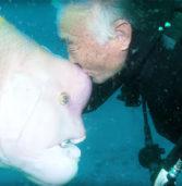 Ιάπωνας δύτης έχει μια απίστευτη φιλία με ένα ψάρι και το επισκέπτεται εδώ και 25 χρόνια!