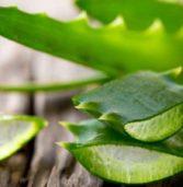 Αλόη Βέρα: Ποιες αρρώστιες θεραπεύει;