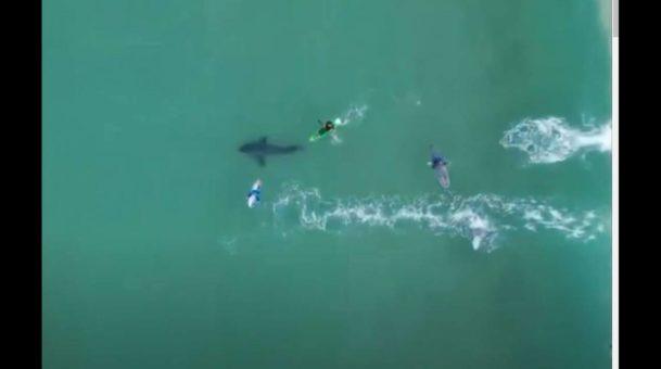 Συγκλονιστικό βίντεο από αέρος δείχνει την ανατριχιαστική «συνάντηση» σέρφερ με λευκό καρχαρία.