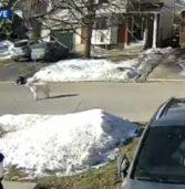 Συγκινητικό βίντεο: Σκύλος σταματά αυτοκίνητο για να σώσει την ιδιοκτήτριά του που κατέρρευσε